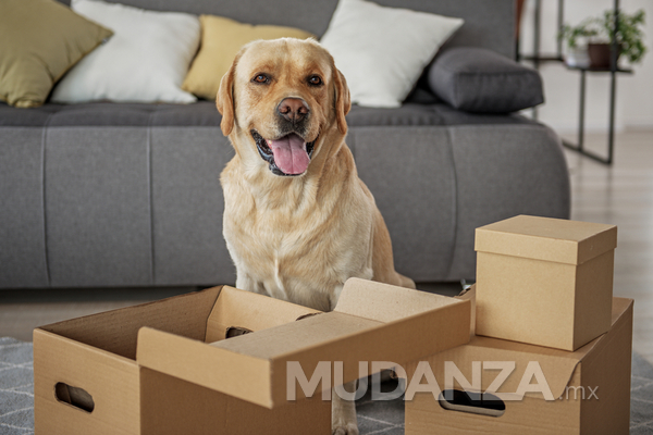 ¿Te mudas? prepara a tus mascotas